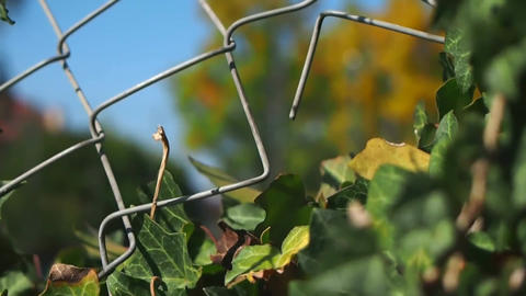 Some leaf in front of wire mesh Live Action