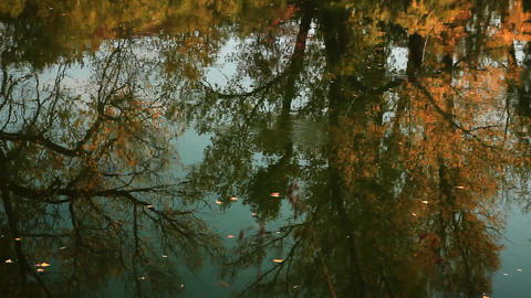 Fallen leaves float on the autumn river reflecting trees with yellow foliage Footage