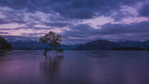 New Zealand Wanaka tree Footage