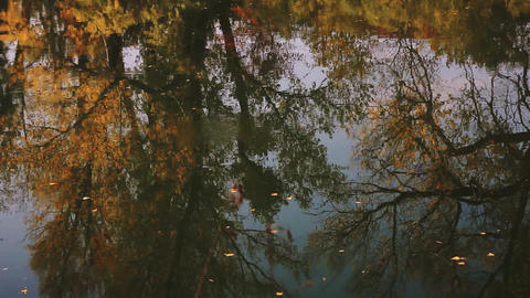Fallen leaves float on the autumn river reflecting trees with yellow foliage Archivo