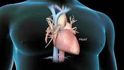 3D animation of Human heart Footage