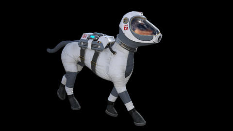 Dog in the Spacesuit Going Footage