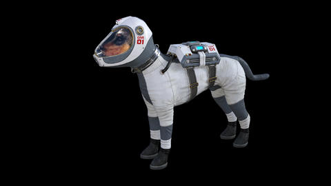 Dog in the Spacesuit Idle Stock Video Footage