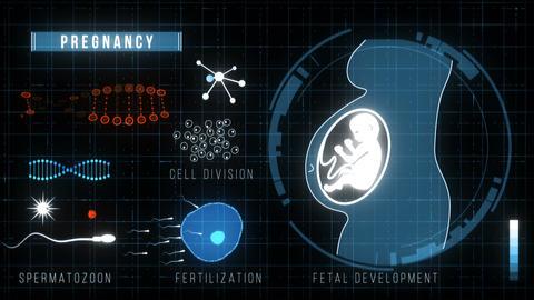 Futuristic HUD Medicine Screen. Pregnancy Animation