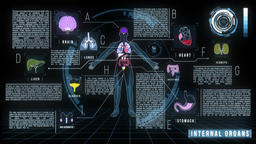 Human Internal Organs Screen infographics Animation