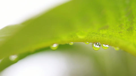 Water drops under a tropical leaf Footage