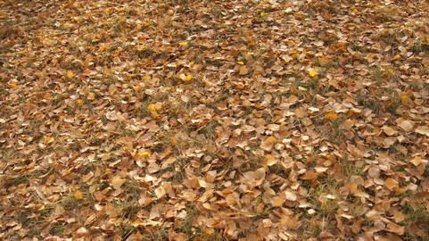 carpet of autumn leaves Photo