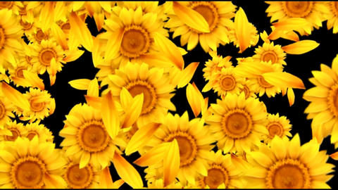 SUNFLOWERS RITUAL FULL SCREEN Live Action