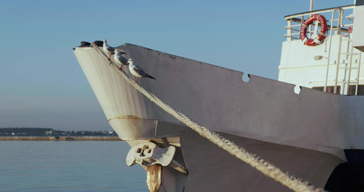 Three gulls sitting on rope. ship stands near pier. ship sway on waves Footage