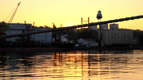 Seagull sitting on rope. Seagull flies off rope. Dawn in port Live Action