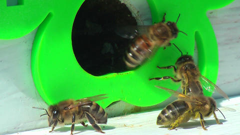 Working process of bees in beehive Footage