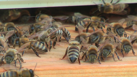Working process of bees in a beehive Footage