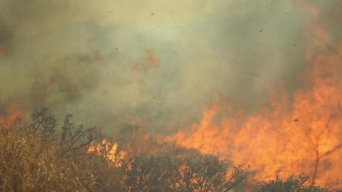 Out of Control Grass Fire Handheld Closeup Footage