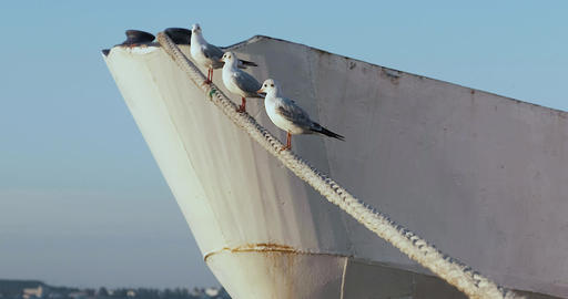 Three gulls sitting on rope. ship stands near pier. ship sway on waves Live Action