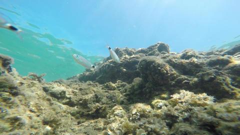 Underwater world Footage