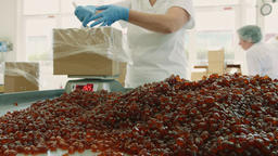 Candy factory. Factory worker packing candies Footage