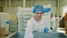 Candy factory. Factory worker checking packing machine Footage