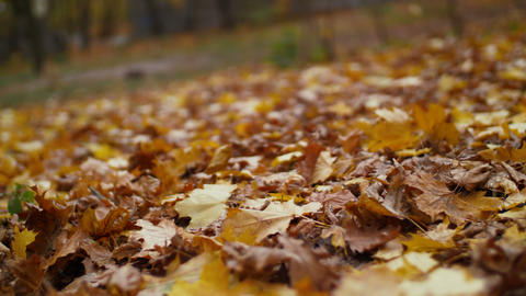 Colorful fallen autumn leaves on ground Archivo