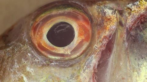 Fish eye macro Footage