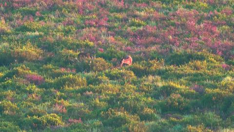 Deers feeding in the wild Footage