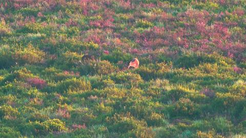 Deers feeding in the wild Stock Video Footage