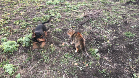 the battle of a dog and a cat GIF