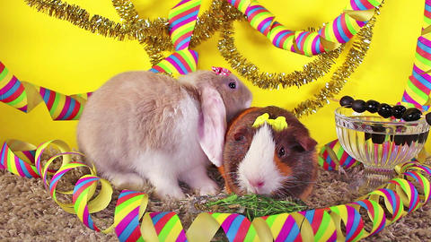 New year's eve party happy new year pet animal concept Footage