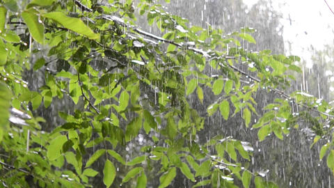 Heavy rain shower downpour cloudburst rainfall comes in the daytime Footage