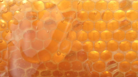 Honeycombs Footage