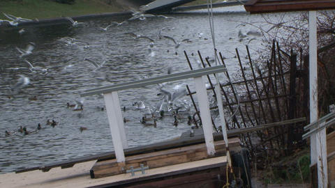 Gulls fly above a river Footage