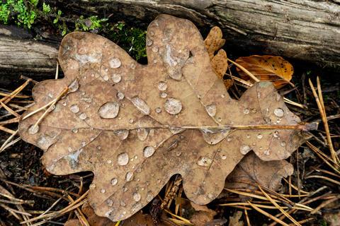 Fallen autumn leaf closeup with raindrops Photo