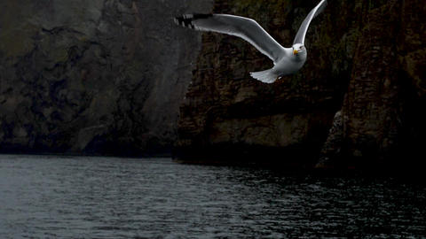 Seagull slow motion flight at backdrop of the rocks and catch pieces of the GIF