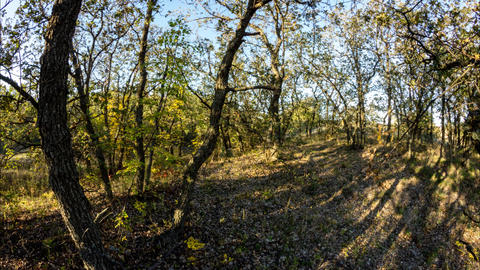 sun goes down Shadows in the oak forest get darker The night is coming Timelapse Footage
