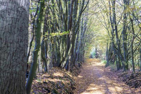 Tree avenue in autumn Photo