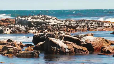 Birds sitting on rock next to shattering ocean wave Footage