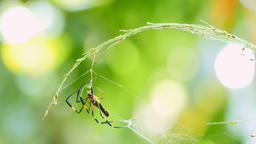 Spider on web in forest Footage