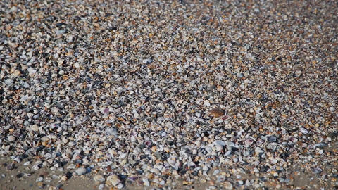 Seashells on the shore. Water waves cover seashells on the sand.the waves splash Footage