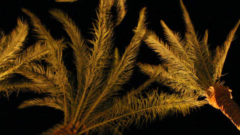 View to top of date palms from bottom at night. Date palm... Stock Video Footage