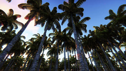 Driving through Palm Trees at sunrise in green jungle Animación