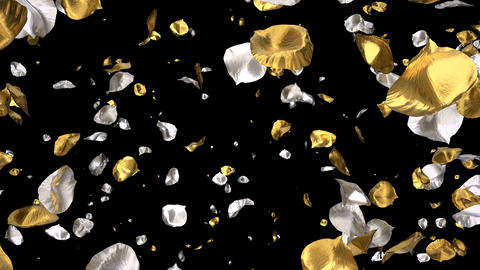 Flying Romantic golden silver Rose Flower Petals Falling... Stock Video Footage