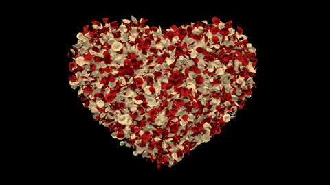 Red White Rose Flower Petals In Heart Shape Alpha Channel seamless Loop 4k Animation