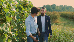 Coworking men on vineyard exploring grapes Footage