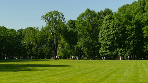 panorama beautiful green park ビデオ