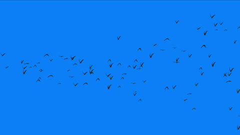 4k flock of pigeons birds fly over,migratory birds animal background Live Action
