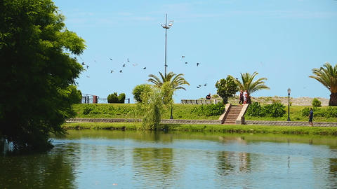 People strolling along beautiful lake surrounded by green palm trees, recreation Live Action