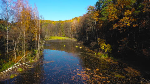 Aerial view of the pond and the bright autumn forest on its shore. Forest is Live Action