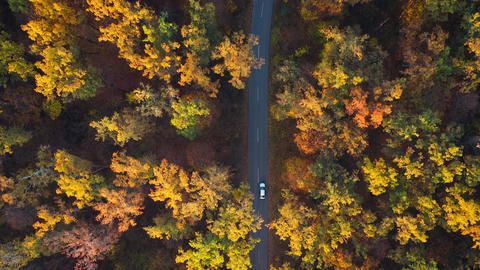 Aerial view on car driving through autumn forest road. Scenic autumn landscape Live Action