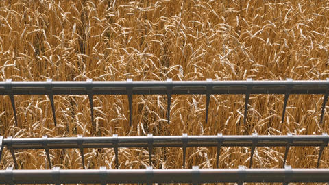 Industrial farming harvest landscape with combine Live Action