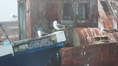 Seagulls Resting On Old Rust Boat Footage