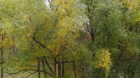 Autumn tree in the park ビデオ